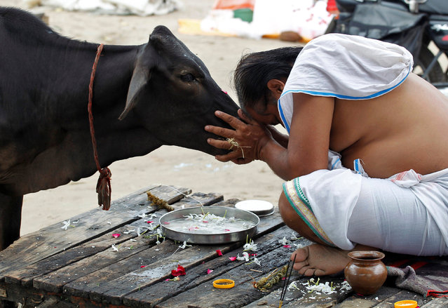 A Hindu devotee offers prayers to a cow after taking a holy dip in the waters of Sangam, a confluence of three rivers, the Ganga, the Yamuna and the mythical Saraswati, in Allahabad, India, September 28, 2016. (Photo by Jitendra Prakash/Reuters)