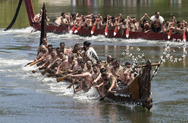 Maori performers paddle Waka (canoes) during a display for Britain's Prince Charles and Camilla, Duchess of Cornwall, at Turangawaewae Marae in Ngaruawahia, south of Auckland, New Zealand November 8, 2015. (Photo by Nigel Marple/Reuters)