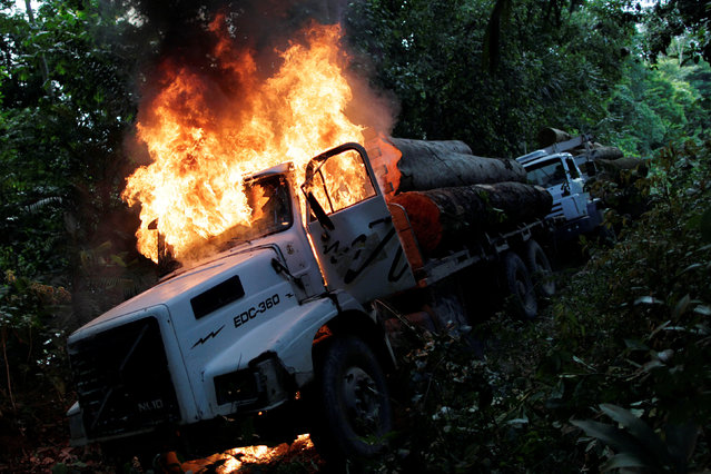 Trucks loaded with tree trunks are burned by agents of the Brazilian Institute for the Environment and Renewable Natural Resources, or Ibama, during an operation to combat illegal mining and logging, in the municipality of Novo Progresso, Para State, northern Brazil, November 11, 2016. When able to do their job, agents of the Brazilian Institute for the Environment and Renewable Natural Resources, or Ibama, are decisive, punishing illegal loggers on the spot. Nearly twice the size of India, the Amazon absorbs an estimated 2 billion tonnes of carbon dioxide per year, making its preservation vital in the fight to halt global warming. Ibama, responsible for preserving Brazil's 65 percent share of the world's largest rainforest, is one of the most important groups in that fight. But after years of surprising success, the rate of deforestation is on the rise again. Over the past four years it has risen 35 percent, as Ibama suffered from a lack of funding amid Brazil's worst recession in a century. (Photo by Ueslei Marcelino/Reuters)