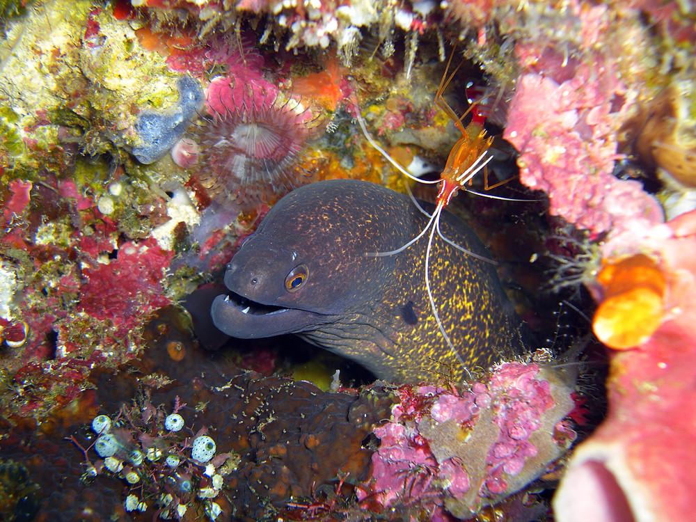 Indonesia Scuba Diving with David M. Hogan