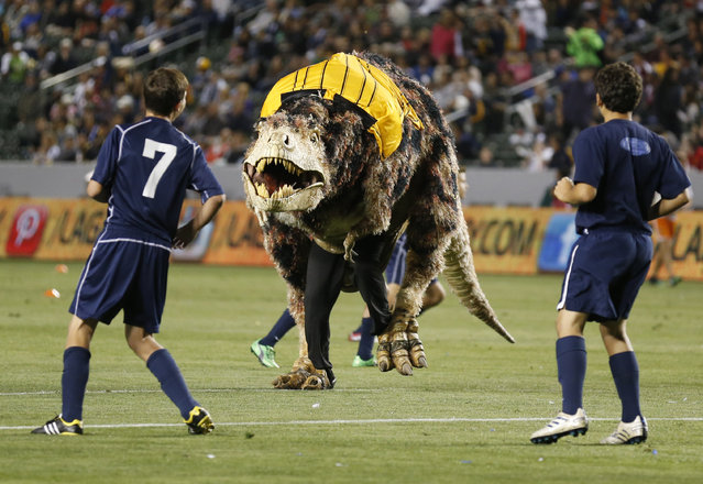 A person in a Tyrannosaurus Rex dinosaur costume runs on the field as young boys play an exhibition soccer match during halftime of an MLS soccer game in Carson, California, May 26, 2013. (Photo by Danny Moloshok/Reuters)