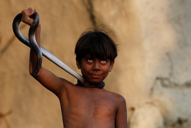 A boy holds a snake as he poses for a photograph in Jogi Dera (snake charmers settlement), in the village of Baghpur, in the central state of Uttar Pradesh, India November 9, 2016. (Photo by Adnan Abidi/Reuters)