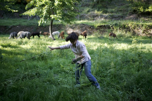 Lisa Vella-Gatt, 46, cleans her farm of weeds near Benfeita, Portugal May 11, 2015. (Photo by Rafael Marchante/Reuters)