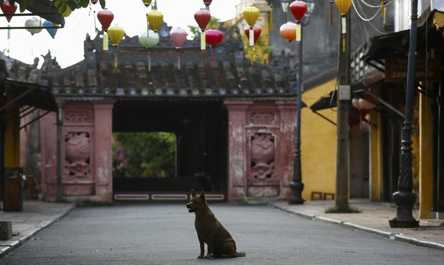A dog sits in front of the Japanese pagoda bridge in Vietnam's central ancient town of Hoi An, a UNESCO heritage site, June 26, 2015. (Photo by Reuters/Kham)