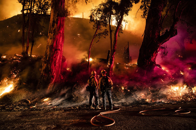 Firefighters work at containing the Maria fire spreading in the hills near Ventura, North West of Los Angeles, California, USA, 01 November 2019. Media reports say that the fire that broke out overnight has already consumed more than 7,000 acres of agricultural land and that authorities have issued mandatory evacuations for many homes in the region. (Photo by Etienne Laurent/EPA/EFE)