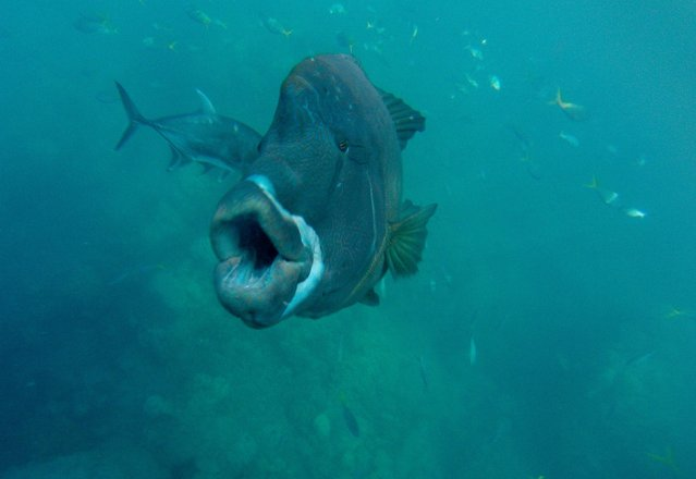 """""""Friendly Fish Near the Great Barrier Reef"""". Paige Bettge, 21, of Fairfax, Va., captured this scene while snorkeling along the Whitsunday Islands in Queensland, Australia, in June. (Photo by Paige Bettge)"""