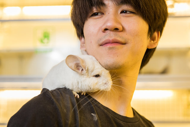 Wu Jia Rui, 25, with a short-tailed chinchilla (Chinchilla chinchilla) in the Guanyuan pet market in Beijing. Native to the Andes in South America, chinchillas have become a popular pet in China. Numerous species of chinchilla are listed as endangered in the wild due to poaching. (Photo by Sean Gallagher/The Guardian)