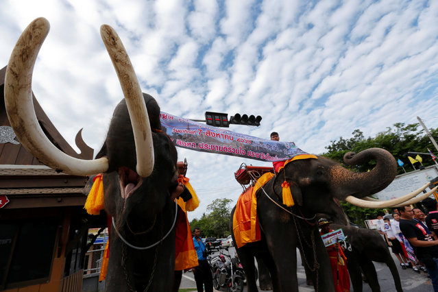 Mahouts and their elephants display a poster during a campaign ahead of the August 7 referendum in Auytthaya province, north of Bangkok, Thailand, August 1, 2016. Officials across the country are drumming up campaigns to encourage voting on the draft constitution in a referendum on Sunday. (Photo by Chaiwat Subprasom/Reuters)