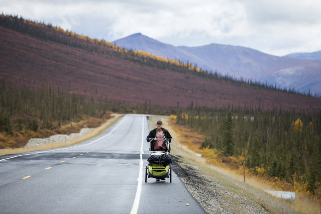 Daniel Johnson-Utsogn pushes a children's bike trailer full of his belongings along the Dalton Highway in the final days of a four-year-long walk from New York City to Prudhoe Bay near Wiseman, Alaska, USA, 06 September 2017. The 23-year-old adventurer said he walked more than 25,000 miles through 49 states. (Photo by Jim Lo Scalzo/EPA)