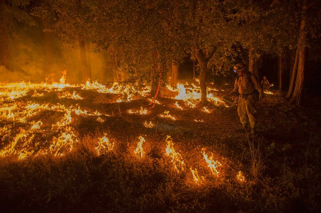 A firefighter lights a backfire to prevent the King Fire from spreading in Fresh Pond, California September 17, 2014. (Photo by Noah Berger/Reuters)