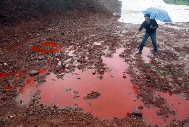 A man points to water and soil which turned red after being contaminated by industrial waste from a closed dye factory, amid heavy rainfall at a mountain in Ruyang county, Henan province September 15, 2014. According to the local government, the dye factory was operating without proper licenses and was shut down by the authority last year after an explosion which caused dye leakage and polluted the underground water. (Photo by Reuters/Stringer)