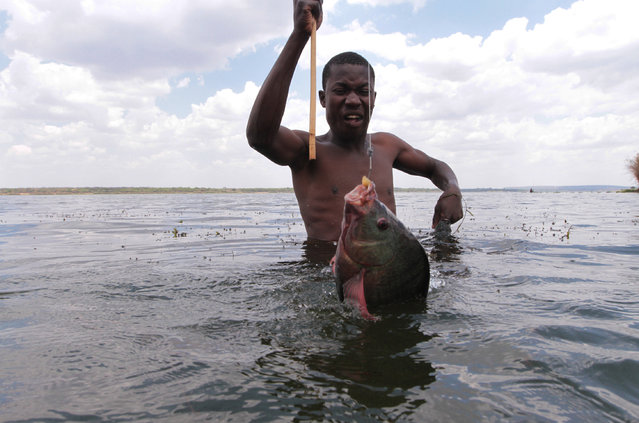 In this photo taken Wednesday, October 29, 2014, a fisherman catches a fish near the shores of Lake Chivero, west of Harare. (Photo by Tsvangirayi Mukwazhi/AP Photo)