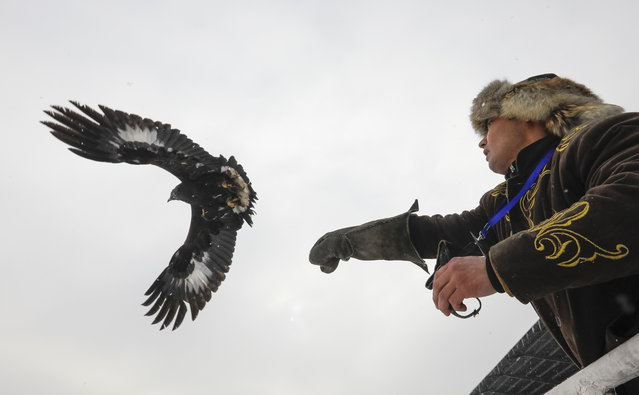 A hunter releases his tamed golden eagle during an annual hunters competition at Almaty hippodrome, Kazakhstan February 9, 2018. (Photo by Shamil Zhumatov/Reuters)