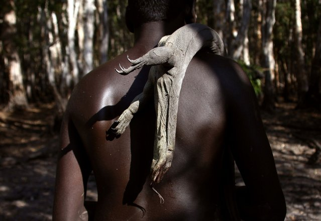 "Australian Aboriginal hunter Marcus Gaykamangu of the Yolngu people, carries an Australian native lizard called a goanna over his shoulder as he walks away from a billabong near the ""out station"" of Yathalamarra, located on the outksirts of the community of Ramingining in East Arnhem Land November 22, 2014. (Photo by David Gray/Reuters)"