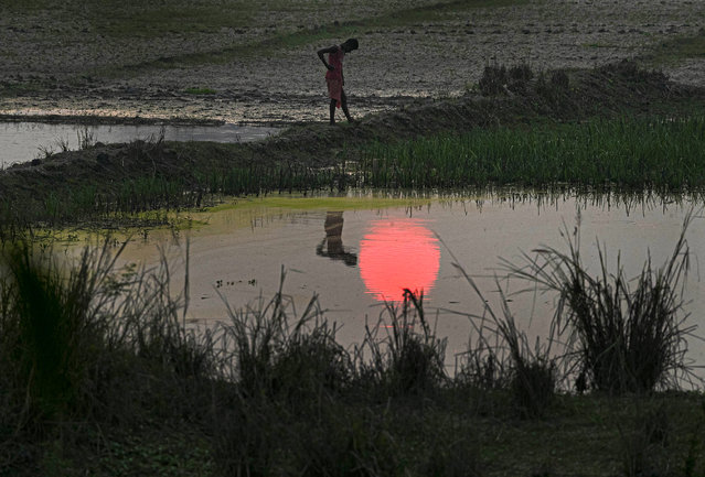 A farmer stands in his paddy field as the sun sets on the outskirts of Gauhati, India, Thursday, November 5, 2020. (Photo by Anupam Nath/AP Photo)