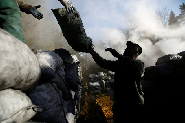 Charcoal burner Zbigniew loads sacks of charcoal on to a truck at a charcoal making site in the forest of Bieszczady Mountains, near the village of Baligrod, Poland October 28, 2016. (Photo by Kacper Pempel/Reuters)