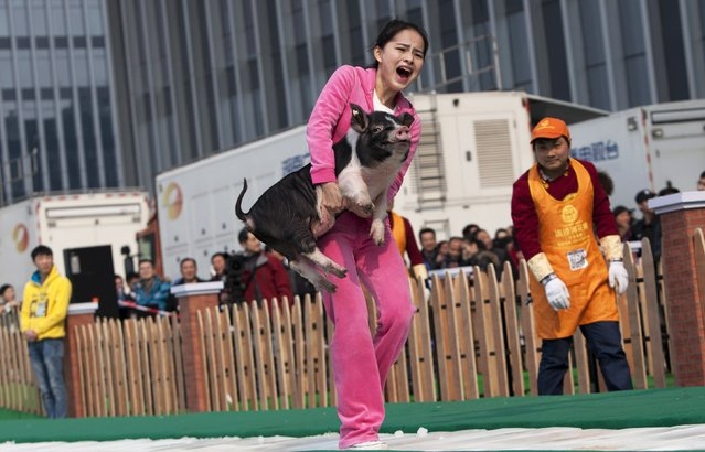 A woman carries a piglet as she runs on ice during a running challenge in Changsha, Hunan province February 8, 2015. A total of 20 people participated in the challenge requiring them to choose a pig ranging between 15 kg and 115 kg in weight, and carrying it while running on a 20.15-metre-long ice track. The participants that complete the challenge will be rewarded with the pig they carried, local media reported. (Photo by Darwin Zhou/Reuters)