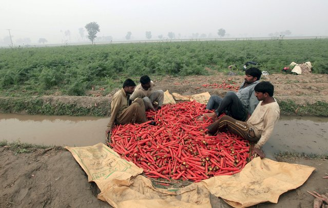 Farmers wash carrots on a polluted stream during harvest season at a farm on the outskirts of Faisalabad, Pakistan, December 8, 2015. (Photo by Fayyaz Hussain/Reuters)