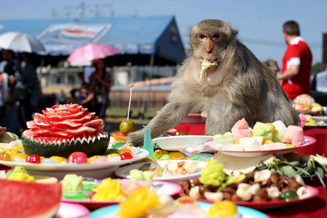 Monkeys enjoy the buffet laid on by locals in Lopburi, Thailand. The annual Monkey Festival is a thanksgiving for the estimated two thousand wild Macaques that roam around the town. (Photo by Deano/Splash News)