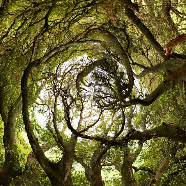 Magical branches intertwine. (Photo by Ali Jardine/Caters News)