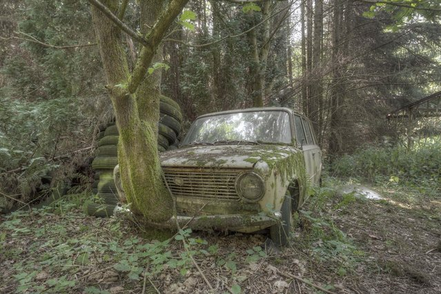 A tree has managed to break through the front of this rusty old banger in its pursuit of daylight. (Photo by Kenneth Provost/Mediadrumworld.com)