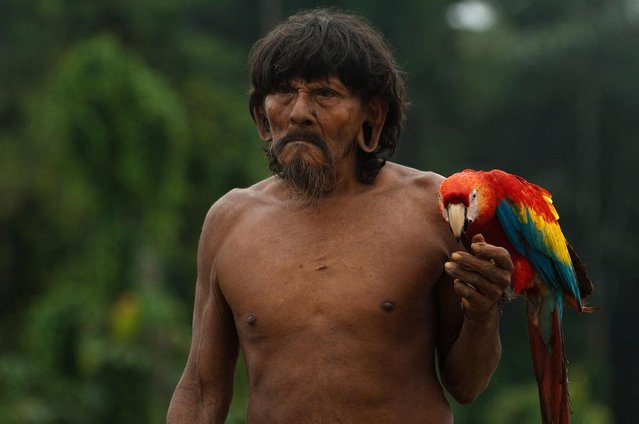 One tribesman with stretched ear-lobes was seen carrying a parrot. (Photo by Pete Oxford/Mediadrumworld.com)