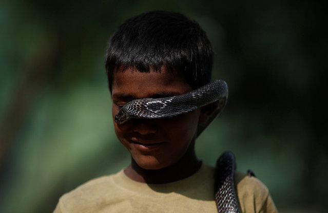 Ashiq Nath poses for a photograph with a snake in Jogi Dera (snake charmers settlement), in the village of Baghpur, in the central state of Uttar Pradesh, India November 10, 2016. (Photo by Adnan Abidi/Reuters)