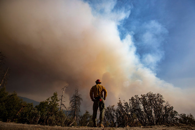 Sierra Cobras fire crew member Gustavo Cisneros keeps an eye on a hillside as flames roil the Sequoia National Forest on the Windy fire near the Tule River Reservation on Thursday, September 16, 2021 in Sequoia National Forest, CA. (Photo by Brian van der Brug/Los Angeles Times/Rex Features/Shutterstock)