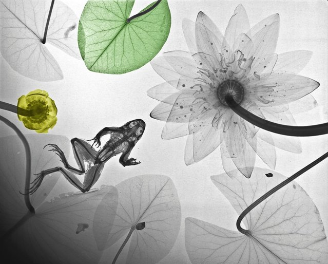 """Waterlily and Frog"". (Photo by Arie van't Riet)"