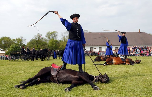 Traditional Hungarian horsemen perform during a celebrations, before the start of the new grazing season in the Great Hungarian Plain in Hortobagy, Hungary, April 23, 2016. (Photo by Laszlo Balogh/Reuters)
