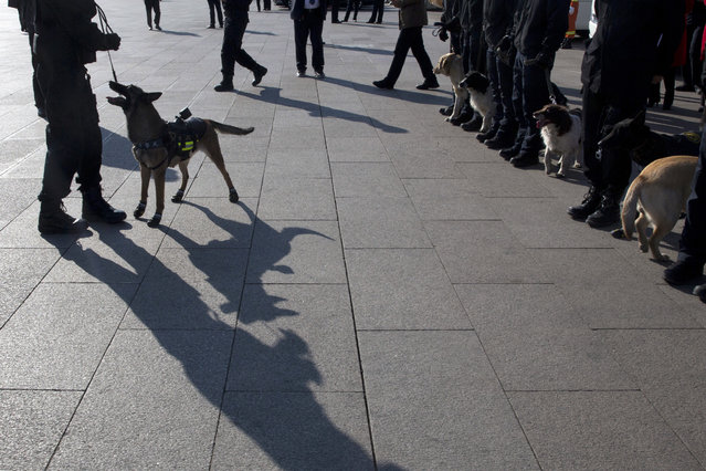 In this photo taken Wednesday, March 8, 2017, police sniffer dogs wait for deployment near the Great Hall of the People where a plenary session of the National People's Congress is held in Beijing, China. (Photo by Ng Han Guan/AP Photo)