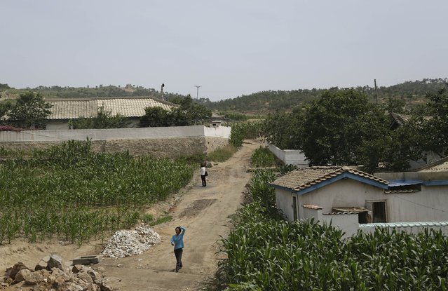 In this June 24, 2015, photo, people walk between corn fields in South Hwanghae, North Korea. There has been almost no rain in this part of the country, according to farmers and local officials interviewed by The Associated Press. While the situation in the area that the AP visited looks grim, it is unclear how severe the drought is in the rest of the country. (Photo by Wong Maye-E/AP Photo)