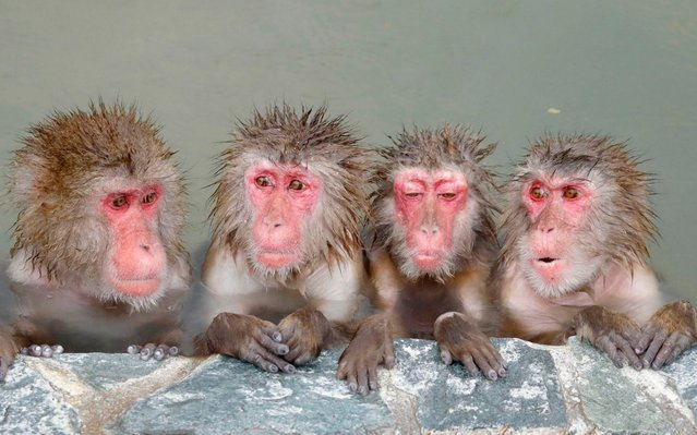 Monkeys bathe in an open-air spa at the Hakodate Tropical Botanical Garden on December 1, 2019, in Hakodate, Hokkaido, northern Japan. (Photo by Kyodo News via AP Images)