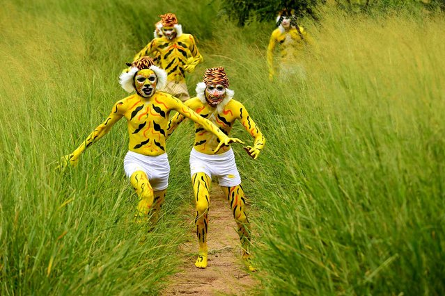 Indian schoolchildren, their face and bodies painted as tigers, run at a park in Bangalore on August 1, 2015, during an awarness programme about the endangered tiger species. International Tiger Day which came into being at the Saint Petersburg Tiger Summit in 2010, is held annually on July 29, to give worldwide attention to the reservation of tigers and it is both an awareness day and a celebration of tigers. (Photo by Manjunath Kiran/AFP Photo)