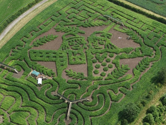 A maize maze featuring Betty O'Barley and Harry O'Hay, characters from Julia Donaldson's latest book The Scarecrow's Wedding, seen from the air at the National Forest Adventure Farm, Burton-on-Trent, on Jule 9, 2014. (Photo by Joe Giddens/PA Wire)