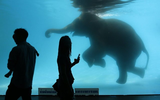 Visitors look at an elephant swimming in a pool at Khao Kheow Zoo in Chonburi, east of Bangkok, Thailand on February 4, 2020. (Photo by Chaiwat Subprasom/SOPA Images/LightRocket via Getty Images)