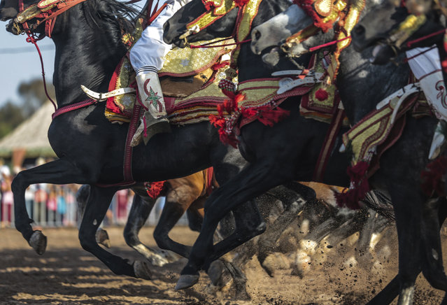 In this Thursday, August 17, 2017 photo, a troupe charges and hold their rifles before firing, during Tabourida, a traditional horse riding show also known as Fantasia, in Mansouria, near Casablanca, Morocco. (Photo by Mosa'ab Elshamy/AP Photo)