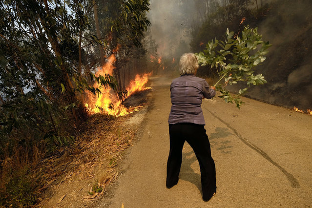 A woman uses a tree branch to fight a fire on the road leading to the village of Parada, near Mortagua, northern Portugal, Thursday, August 11 2016. (Photo by Sergio Azenha/AP Photo)