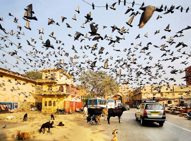 """""""I was hanging around Jaipur, when I noticed a cloud of birds in the air. I just instinctively released the shutter. The soul of Sir Alfred Hitchcock lives here, I thought"""". (Photo and comment by Maciej Makowski, Poland/2013 Sony World Photography Awards"""