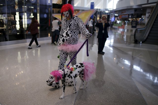 A dalmation dressed in a tutu Halloween costume walks through the concourse, as part of a program to de-stress passengers at the international boarding gate area of LAX airport in Los Angeles, California, United States, October 27, 2015. (Photo by Lucy Nicholson/Reuters)