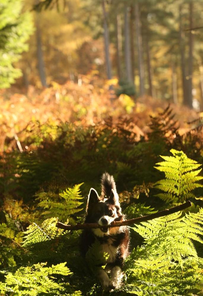 Autumn Colours in Scotland