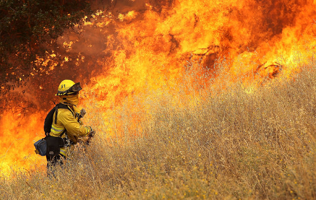 A firefighter from Windsor, California, walks next to a wall of flames as he starts a back fire in tall dry grass while battling the Rocky Fire on July 30, 2015 in Lower Lake, California. (Photo by Justin Sullivan/Getty Images)