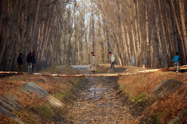 Boys cross a canal through a log on the outskirts of Srinagar, November 6, 2018. (Photo by Danish Ismail/Reuters)