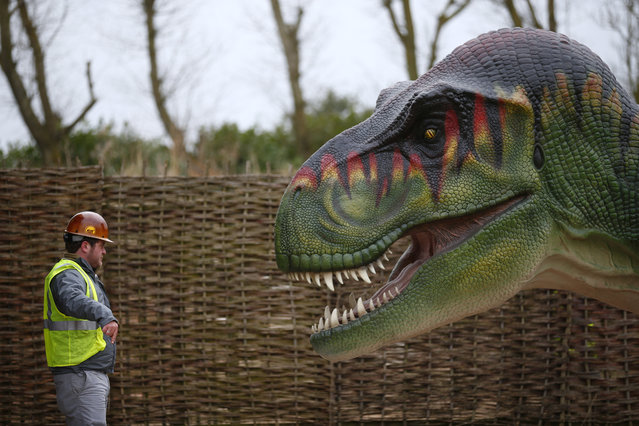 A worker directs the removal of a Tyrannosaurus Rex dinosaur from a lorry at Twycross Zoo near Atherstone, central England, March 1, 2013. (Photo by Darren Staples/Reuters)