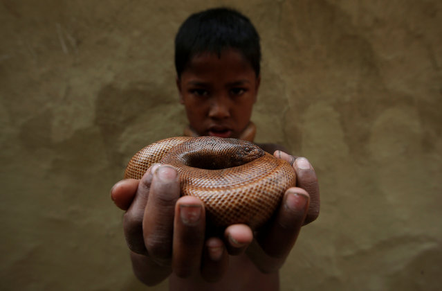 Manish Nath holds a snake as he poses for a photograph in Jogi Dera (Snake charmers settlement), in the village of Baghpur, in the central state of Uttar Pradesh, India November 10, 2016. (Photo by Adnan Abidi/Reuters)