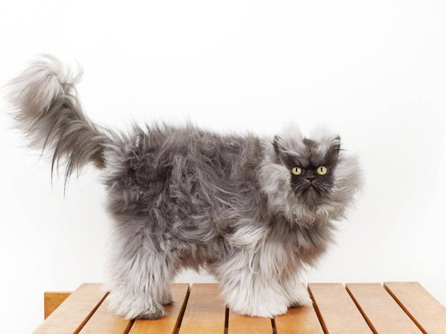 Internet Mourns Death Of Colonel Meow