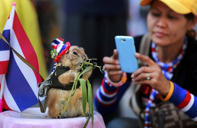 An anti-government protester takes a picture of a squirrel near Pathumwan stage in Bangkok, on February 6, 2014. Thailand's main opposition party petitioned a court Tuesday to annul last weekend's disrupted national election, launching a legal challenge that could prolong the deeply divided country's political paralysis. (Photo by Wason Wanichakorn/Associated Press)