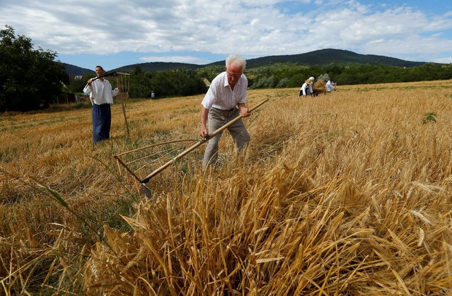 A man harvests barley with a scythe during the Harvest Festival in Hosszuheteny, Hungary, July 9, 2016. (Photo by Laszlo Balogh/Reuters)