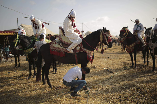 In this Thursday, August 17, 2017 photo, horsemen prepare their horses before taking part in Tabourida, a traditional horse riding show also known as Fantasia, in Mansouria, near Casablanca, Morocco. (Photo by Mosa'ab Elshamy/AP Photo)