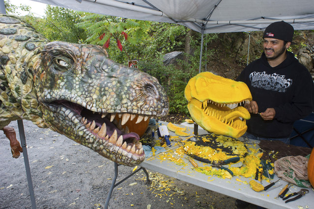 In this image released on Friday, September 26, 2014, the Mighty T-Rex, a 15-foot juvenile T-Rex puppet, watches as Chris Vierra, renowned pumpkin carver from Villafane Studios, creates a lifelike Tyrannosaurus Rex sculpture using pumpkins and squash at Field Station: Dinosaurs. (Photo by Charles Sykes/AP photo/Invision for Field Station: Dinosaurs)